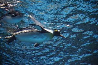 ペンギン12min.jpg