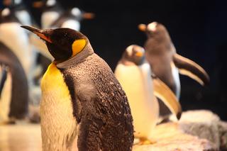 ペンギン13min.jpg