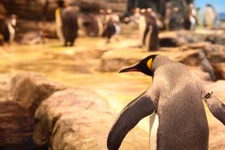 ペンギン2min.jpg