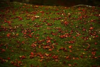 苔と落葉.jpg