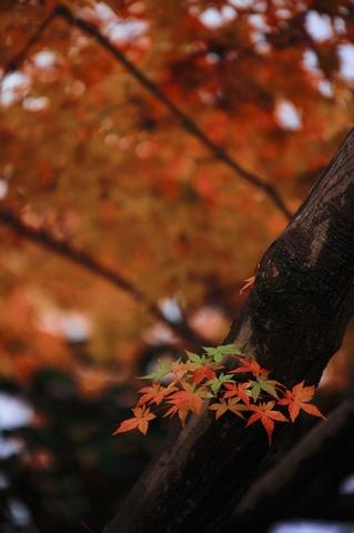 龍福寺8_R.JPG